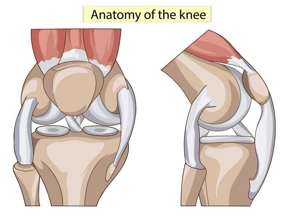 Principi del trattamento conservativo dopo lesione del legamento crociato anteriore