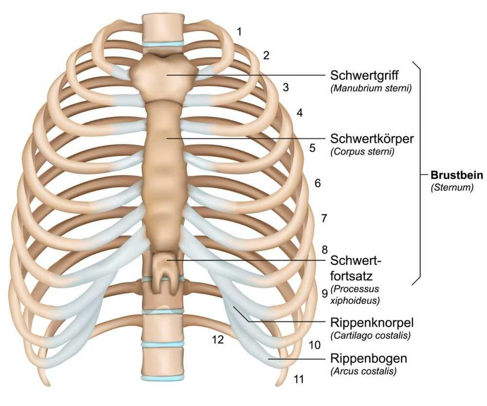 inflamația sternului deformarea artrozei articulațiilor genunchiului