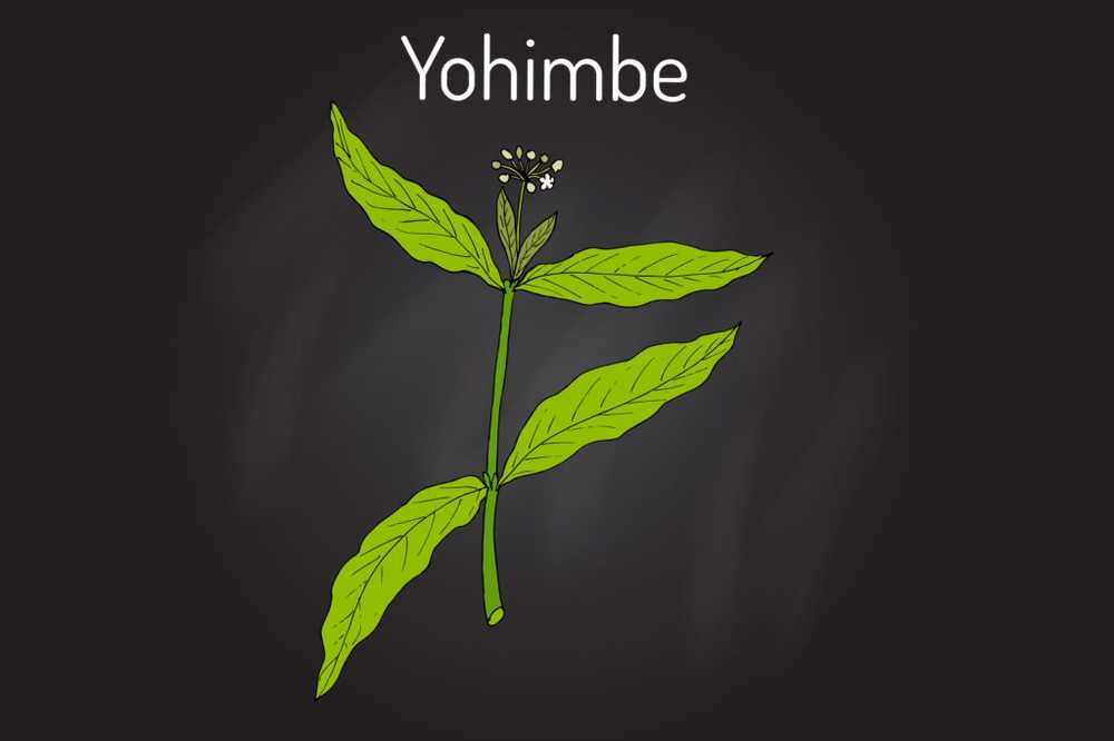 Yohimbe - effect and application