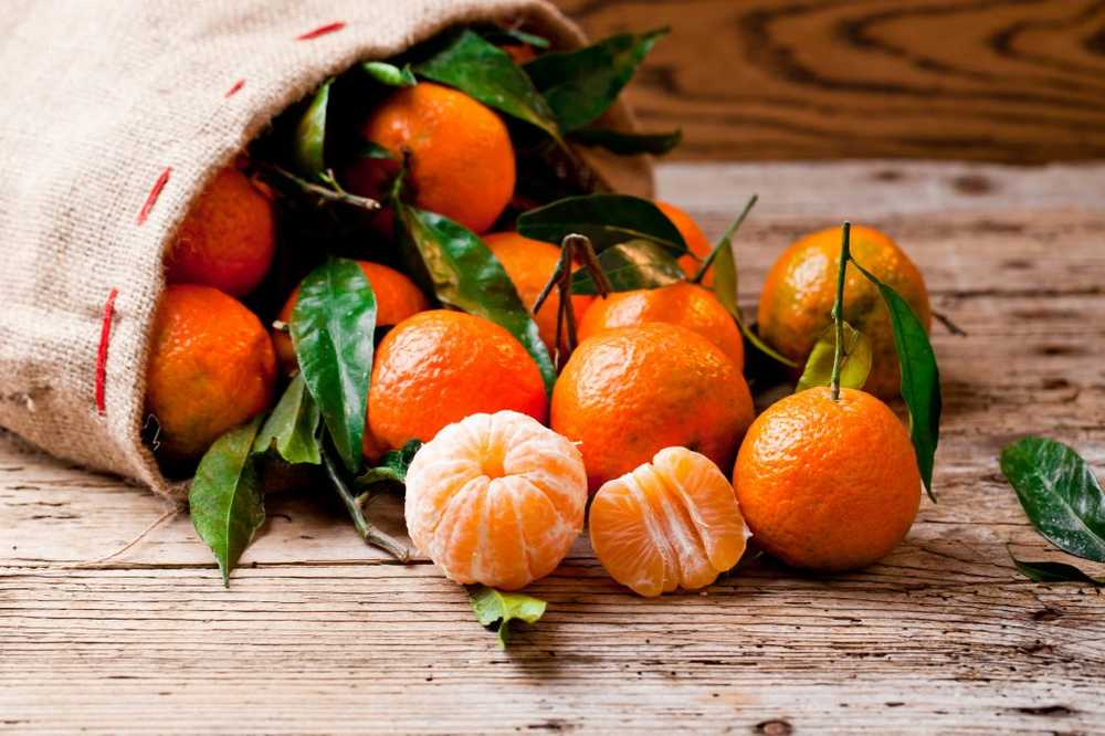 Citrus fruits - Real power from nature / Health News