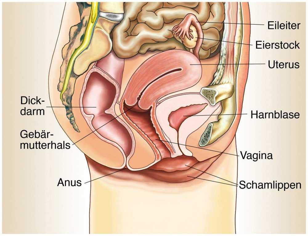 la prostata infetta può causare dolore pelvico