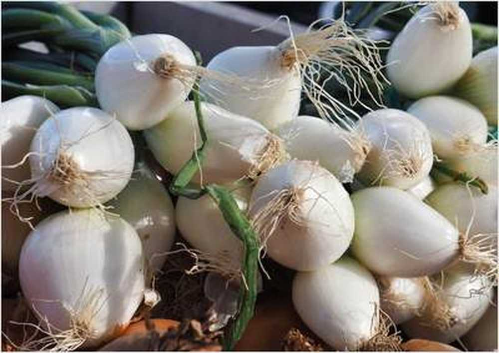 Onion chosen as medicinal plant of the year 2015
